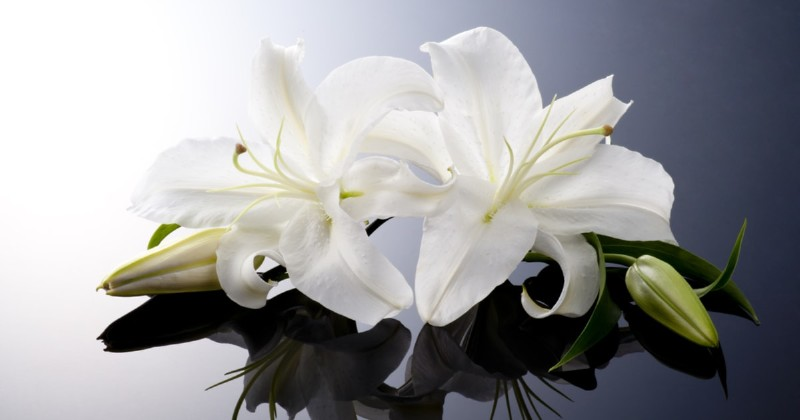 Funeral Gift Ideas - Flowers