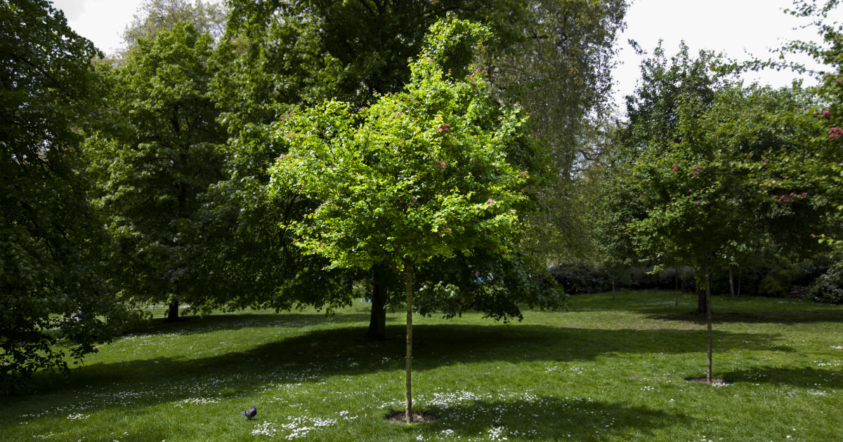Planting a tree is a great way to memorialize a loved one